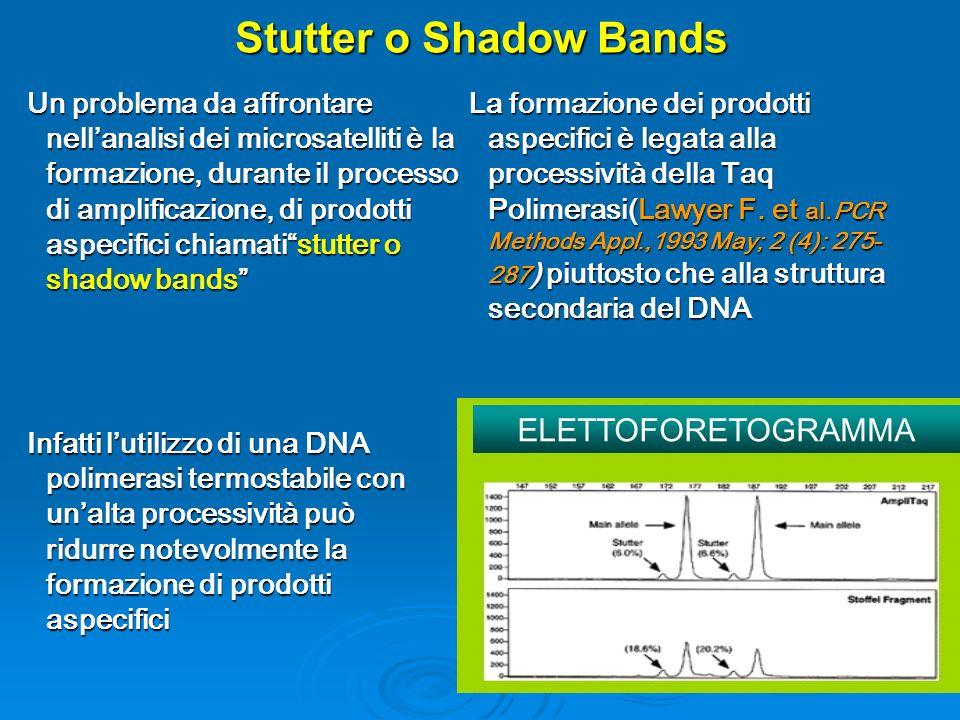 Stutter o Shadow Bands Un problema da affrontare nellanalisi dei microsatelliti è la formazione, durante il processo di amplificazione, di prodotti as
