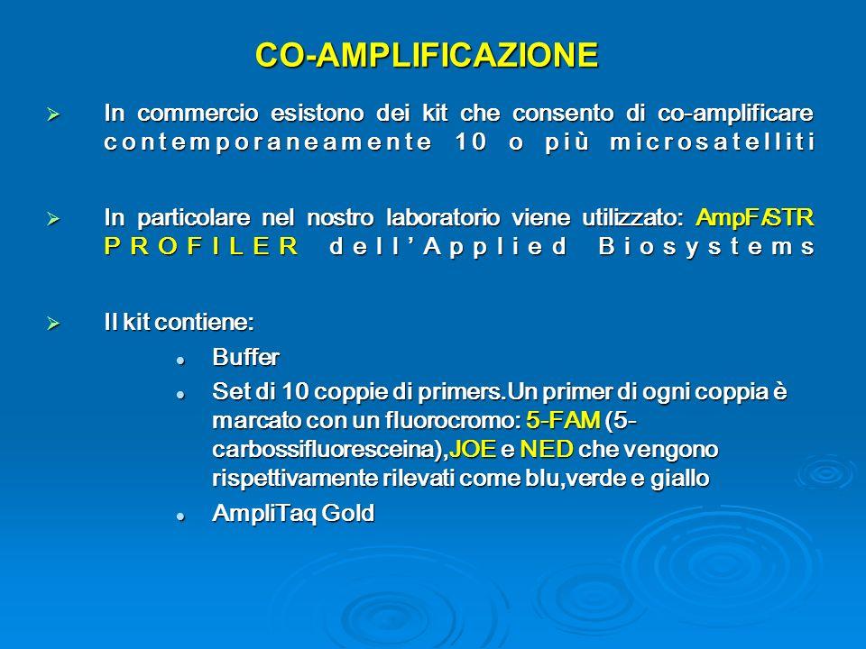 CO-AMPLIFICAZIONE In commercio esistono dei kit che consento di co-amplificare contemporaneamente 10 o più microsatelliti In commercio esistono dei kit che consento di co-amplificare contemporaneamente 10 o più microsatelliti In particolare nel nostro laboratorio viene utilizzato: AmpFlSTR PROFILER dellApplied Biosystems In particolare nel nostro laboratorio viene utilizzato: AmpFlSTR PROFILER dellApplied Biosystems Il kit contiene: Il kit contiene: Buffer Buffer Set di 10 coppie di primers.Un primer di ogni coppia è marcato con un fluorocromo: 5-FAM (5- carbossifluoresceina),JOE e NED che vengono rispettivamente rilevati come blu,verde e giallo Set di 10 coppie di primers.Un primer di ogni coppia è marcato con un fluorocromo: 5-FAM (5- carbossifluoresceina),JOE e NED che vengono rispettivamente rilevati come blu,verde e giallo AmpliTaq Gold AmpliTaq Gold