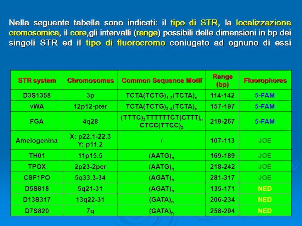 STR system Chromosomes Common Sequence Motif Range (bp) Fluorophores D3S13583pTCTA(TCTG) 1-3 (TCTA) n 114-1425-FAM vWA12p12-pterTCTA(TCTG) 3-4 (TCTA) n 157-1975-FAM FGA4q28 (TTTC) 3 TTTTTTCT(CTTT) n CTCC(TTCC) 2 219-2675-FAM Amelogenina X: p22.1-22.3 Y: p11.2 /107-113JOE TH0111p15.5(AATG) n 169-189JOE TPOX2p23-2per(AATG) n 218-242JOE CSF1PO5q33.3-34(AGAT) n 281-317JOE D5S8185q21-31(AGAT) n 135-171NED D13S31713q22-31(GATA) n 206-234NED D7S8207q(GATA) n 258-294NED Nella seguente tabella sono indicati: il tipo di STR, la localizzazione cromosomica, il core,gli intervalli (range) possibili delle dimensioni in bp dei singoli STR ed il tipo di fluorocromo coniugato ad ognuno di essi