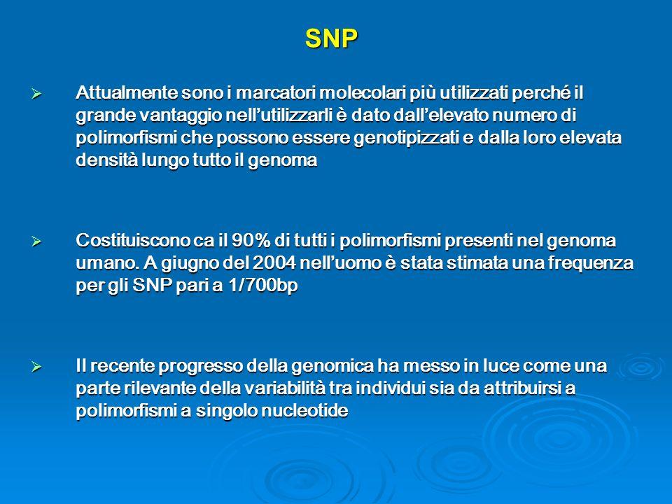 SNP Attualmente sono i marcatori molecolari più utilizzati perché il grande vantaggio nellutilizzarli è dato dallelevato numero di polimorfismi che po