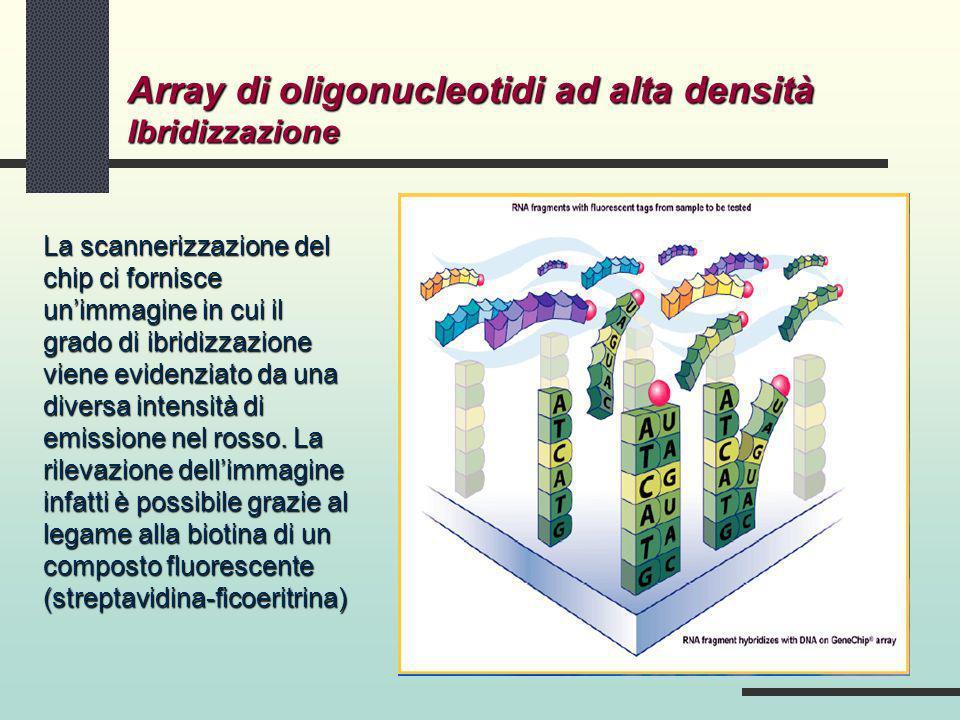Array di oligonucleotidi ad alta densità Ibridizzazione La scannerizzazione del chip ci fornisce unimmagine in cui il grado di ibridizzazione viene ev