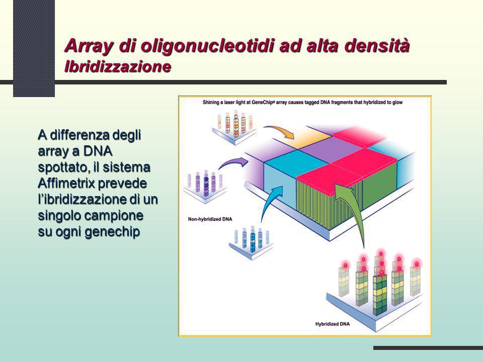 Array di oligonucleotidi ad alta densità Ibridizzazione A differenza degli array a DNA spottato, il sistema Affimetrix prevede libridizzazione di un s