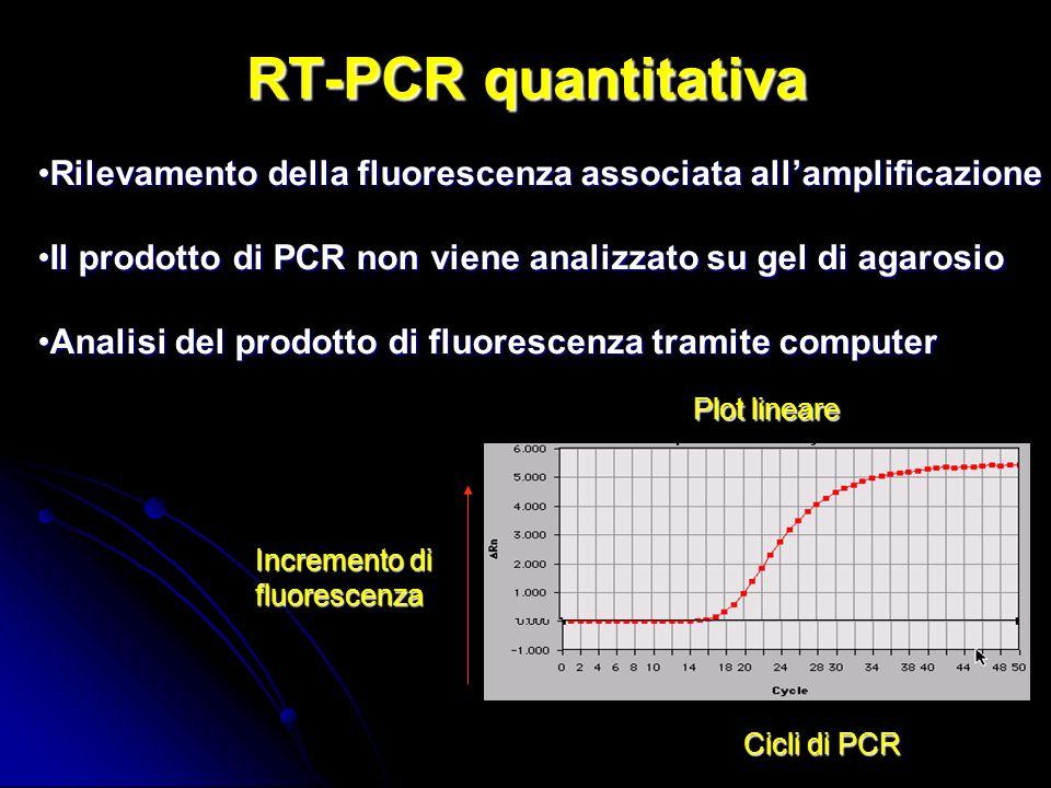 RT-PCR quantitativa Plot lineare Incremento di fluorescenza Cicli di PCR Rilevamento della fluorescenza associata allamplificazioneRilevamento della fluorescenza associata allamplificazione Il prodotto di PCR non viene analizzato su gel di agarosioIl prodotto di PCR non viene analizzato su gel di agarosio Analisi del prodotto di fluorescenza tramite computerAnalisi del prodotto di fluorescenza tramite computer