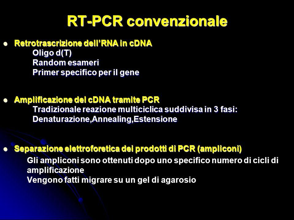 RT-PCR convenzionale Retrotrascrizione dellRNA in cDNA Retrotrascrizione dellRNA in cDNA Oligo d(T) Random esameri Primer specifico per il gene Amplificazione del cDNA tramite PCR Amplificazione del cDNA tramite PCR Tradizionale reazione multiciclica suddivisa in 3 fasi: Denaturazione,Annealing,Estensione Separazione elettroforetica dei prodotti di PCR (ampliconi) Separazione elettroforetica dei prodotti di PCR (ampliconi) Gli ampliconi sono ottenuti dopo uno specifico numero di cicli di amplificazione Vengono fatti migrare su un gel di agarosio