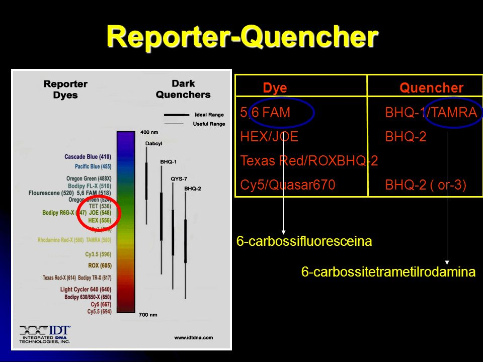 Reporter-Quencher DyeQuencher 5,6 FAMBHQ-1/TAMRA HEX/JOEBHQ-2 Texas Red/ROXBHQ-2 Cy5/Quasar670BHQ-2 ( or-3) 6-carbossifluoresceina 6-carbossitetrameti