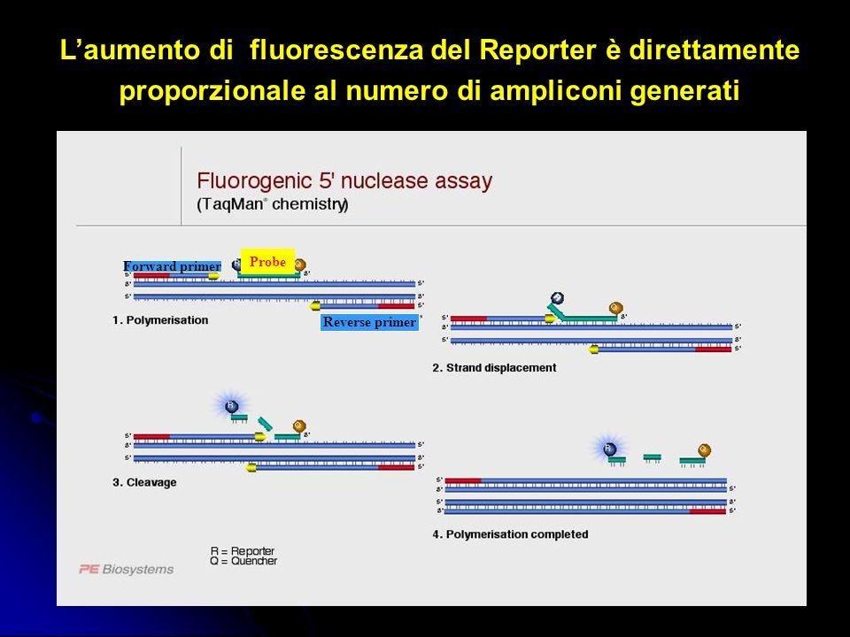 Forward primer Reverse primer Probe Laumento di fluorescenza del Reporter è direttamente proporzionale al numero di ampliconi generati