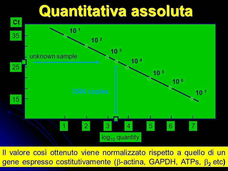 Quantitativa assoluta 10 7 10 6 10 5 10 4 10 3 10 2 10 1 15 234567 log 10 quantity Ct unknown sample 3500 copies 35 25 1 Il valore così ottenuto viene normalizzato rispetto a quello di un gene espresso costitutivamente ( -actina, GAPDH, ATPs, 2 etc)