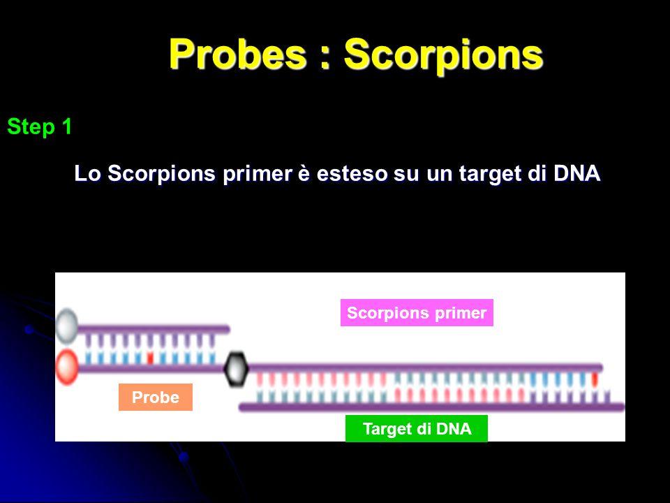 Probes : Scorpions Step 1 Lo Scorpions primer è esteso su un target di DNA Scorpions primer Probe Target di DNA