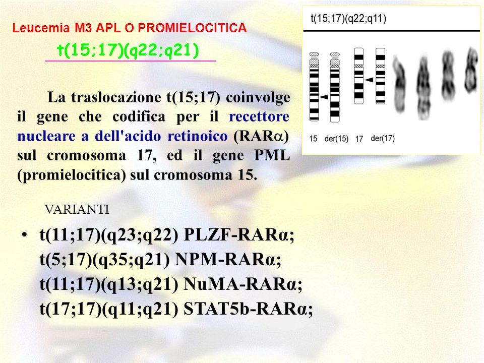 t(11;17)(q23;q22) PLZF-RARα; t(5;17)(q35;q21) NPM-RARα; t(11;17)(q13;q21) NuMA-RARα; t(17;17)(q11;q21) STAT5b-RARα; t(15;17)(q22;q21) Leucemia M3 APL