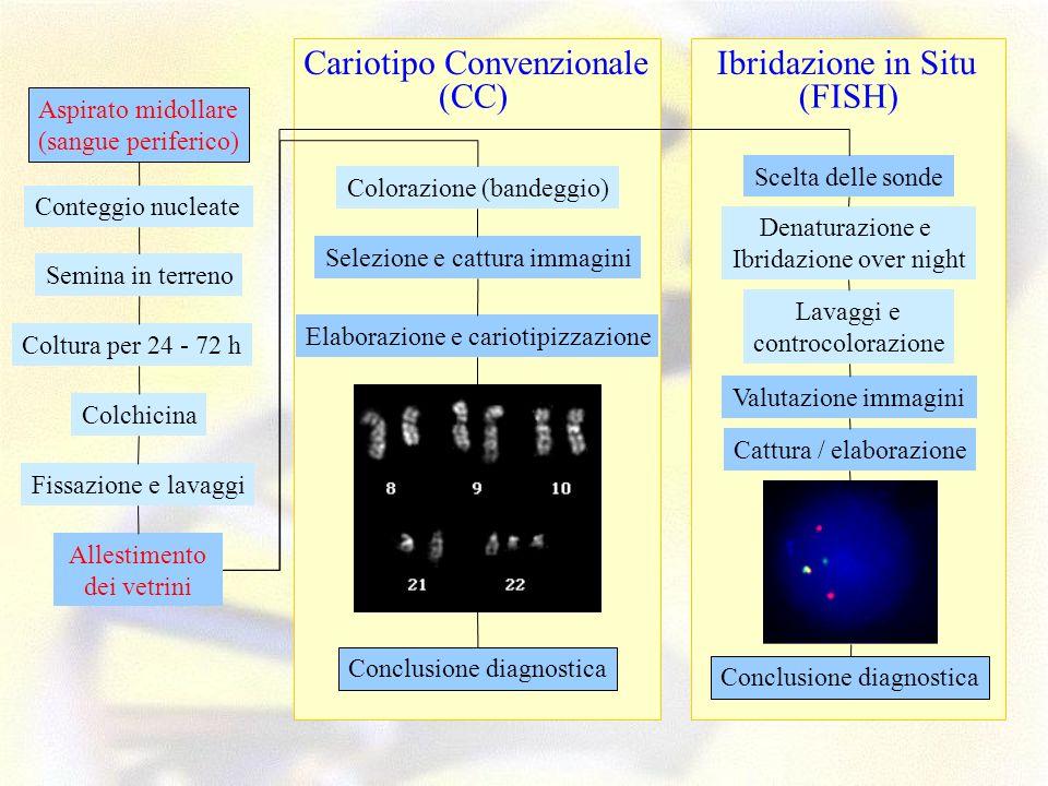 Colorazione (bandeggio) Selezione e cattura immagini Elaborazione e cariotipizzazione Conclusione diagnostica (CC) Cariotipo Convenzionale Aspirato mi
