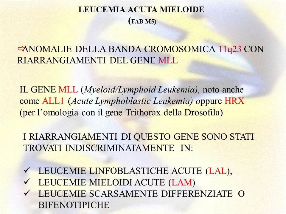 I RIARRANGIAMENTI DI QUESTO GENE SONO STATI TROVATI INDISCRIMINATAMENTE IN: LEUCEMIE LINFOBLASTICHE ACUTE (LAL), LEUCEMIE MIELOIDI ACUTE (LAM) LEUCEMI