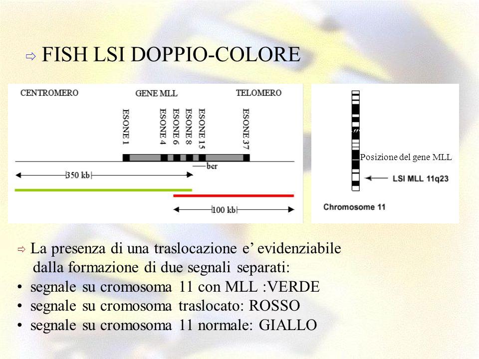 FISH LSI DOPPIO-COLORE La presenza di una traslocazione e evidenziabile dalla formazione di due segnali separati: segnale su cromosoma 11 con MLL :VER