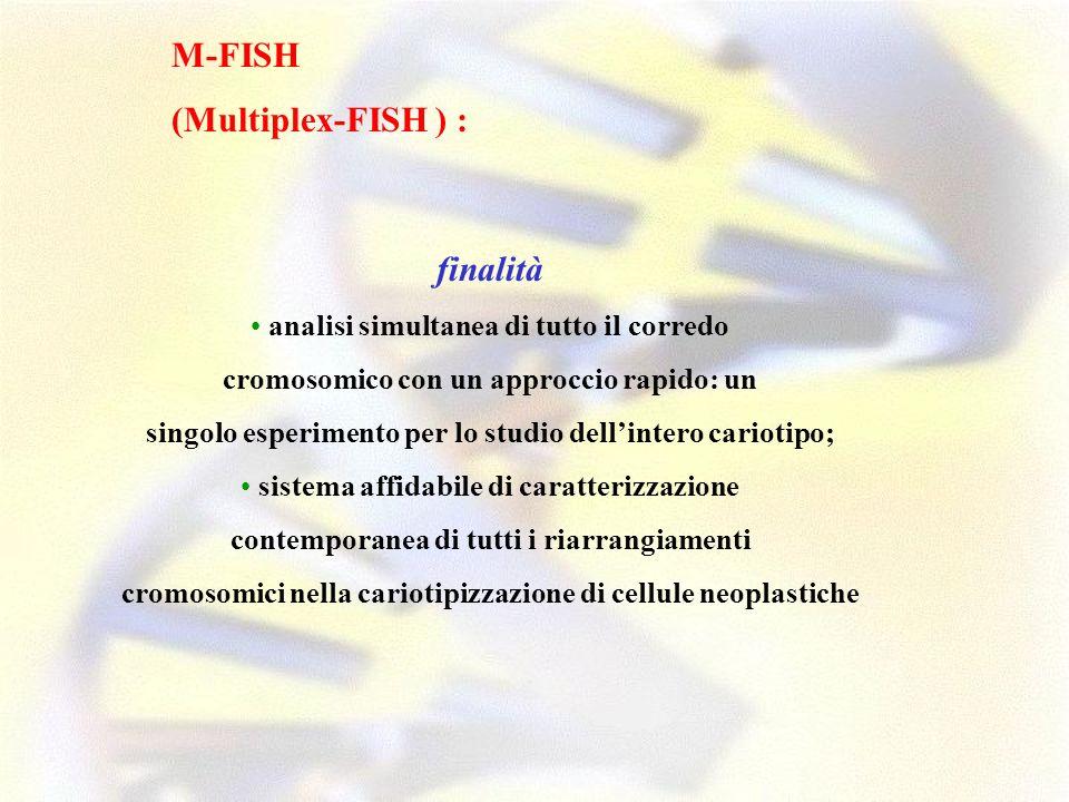 M-FISH (Multiplex-FISH ) : finalità analisi simultanea di tutto il corredo cromosomico con un approccio rapido: un singolo esperimento per lo studio d