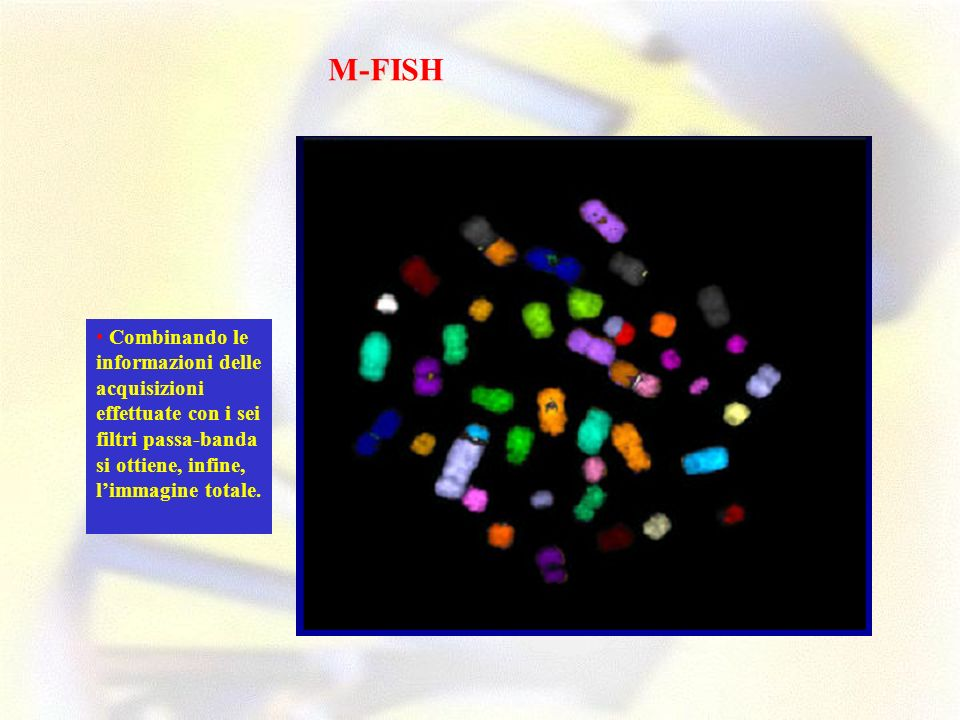 Combinando le informazioni delle acquisizioni effettuate con i sei filtri passa-banda si ottiene, infine, limmagine totale. M-FISH