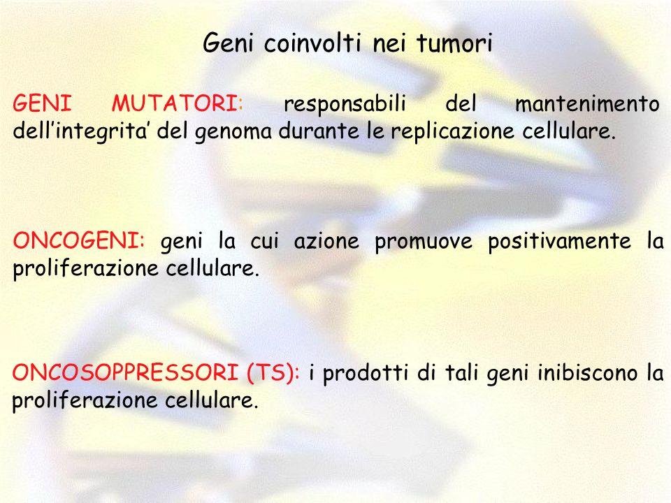 Geni coinvolti nei tumori GENI MUTATORI: responsabili del mantenimento dellintegrita del genoma durante le replicazione cellulare. ONCOGENI: geni la c
