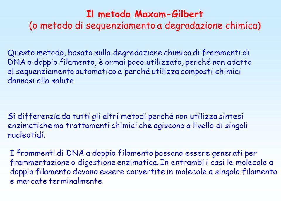 Metodi di Maxam-Gilbert e di Sanger Hanno in comune la generazione di una scaletta di frammenti di DNA A singolo filamento, ciascuno più lungo del pre