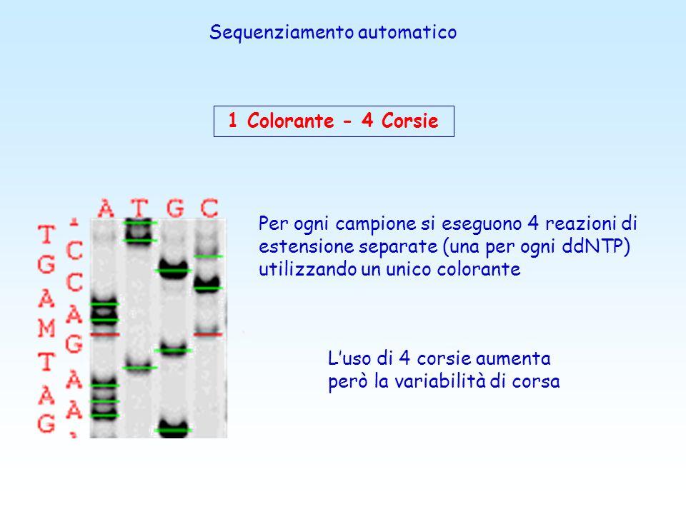 Nuovi metodi di sequenziamento Il sequenziamento a ciclo termico ( PCR asimmetrica) Il sequenziamento automatizzato con marcatori fluorescenti Il piro