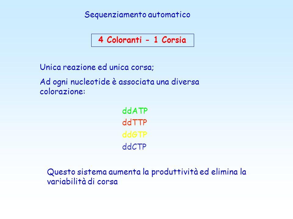 1 Colorante - 4 Corsie Per ogni campione si eseguono 4 reazioni di estensione separate (una per ogni ddNTP) utilizzando un unico colorante Luso di 4 c