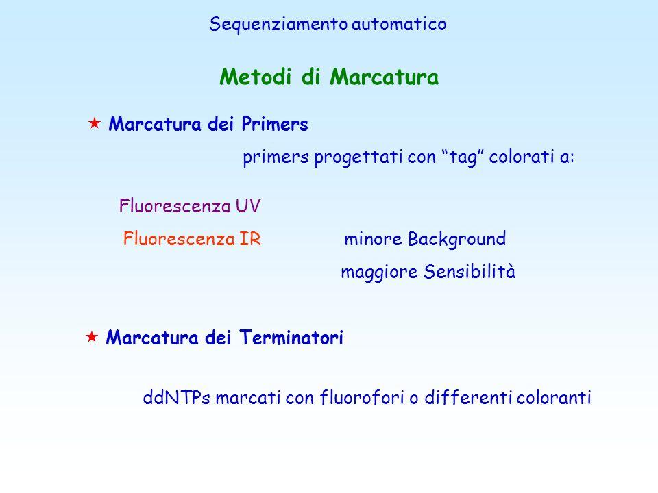 Il sequenziamento automatizzato con marcatori fluorescenti Coniugando a ciascun ddNTP un diverso marcatore fluorescente, è possibile effettuare le qua