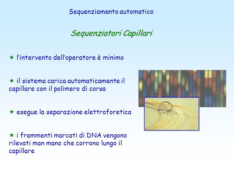 slab gel di poliacrilammide (dal 4% al 6%) molto sottili in condizioni denaturanti (Urea) Apparati verticali di lunghezza variabile a seconda del nume