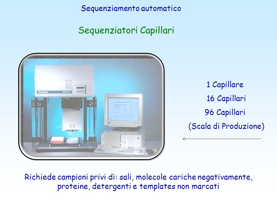 lintervento delloperatore è minimo il sistema carica automaticamente il capillare con il polimero di corsa esegue la separazione elettroforetica i fra