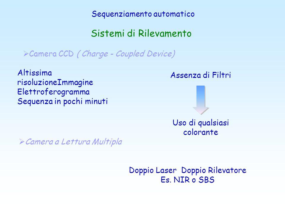 Sequenziatori Capillari Richiede campioni privi di: sali, molecole cariche negativamente, proteine, detergenti e templates non marcati 1 Capillare 16
