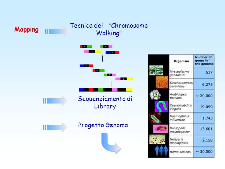 Sequenziamento di DNA o cDNA sconosciuto ( es. per caratterizzare regioni del DNA e trascritti genici precedentemente localizzate con analisi di linka