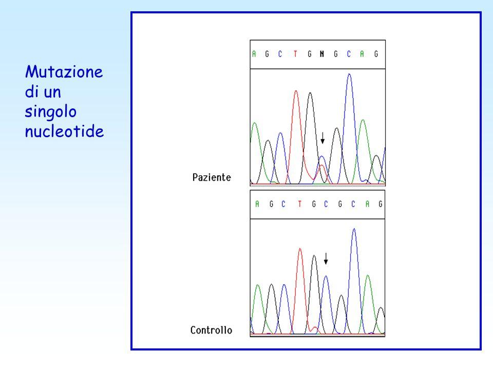 Dimensione della mutazione Genoma Cromosoma Gene Poliploidie Aneuploidie Riarrangiamenti cromosomici Piccole delezioni/duplicazioni Delezioni/duplicaz