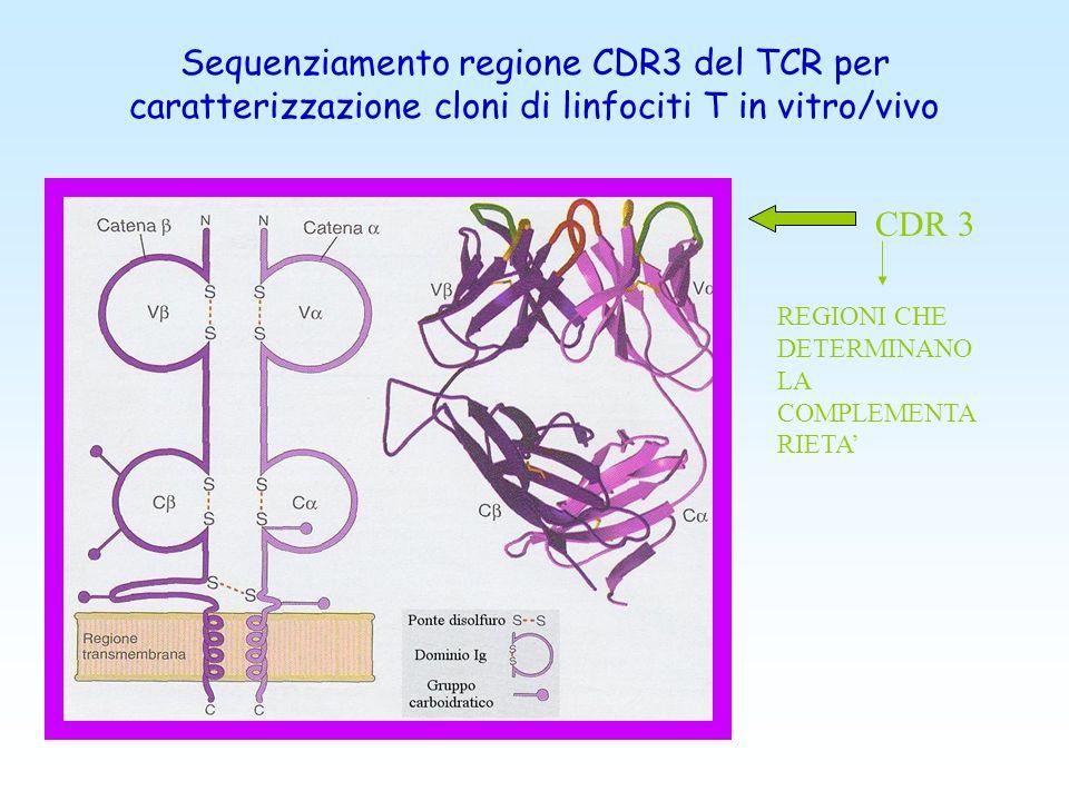 Sequenziamento della VH-CDR3 Pession et al, Leuk Lymphoma 2003