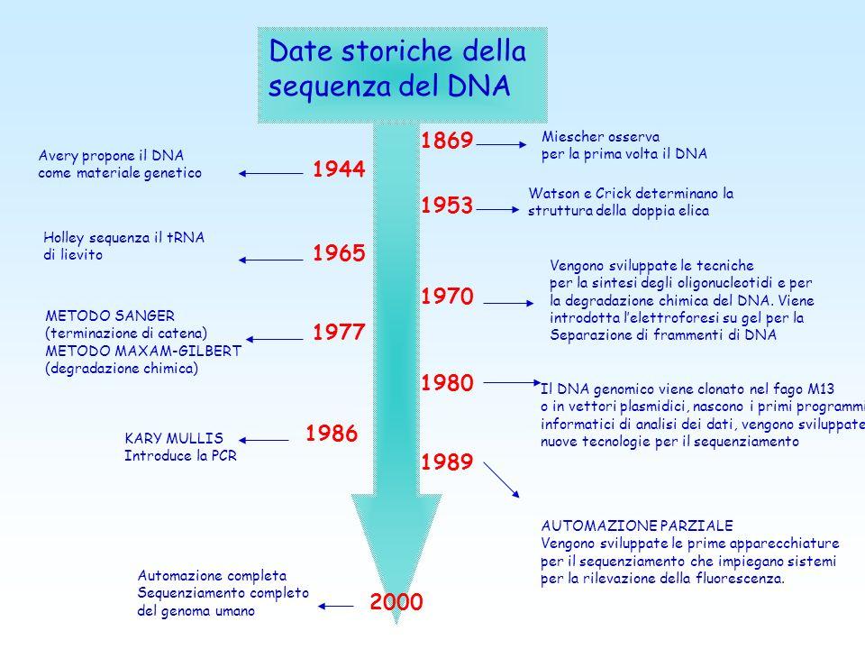 Date storiche della sequenza del DNA 1869 Miescher osserva per la prima volta il DNA 1953 Watson e Crick determinano la struttura della doppia elica 1944 Avery propone il DNA come materiale genetico 1965 Holley sequenza il tRNA di lievito 1970 Vengono sviluppate le tecniche per la sintesi degli oligonucleotidi e per la degradazione chimica del DNA.