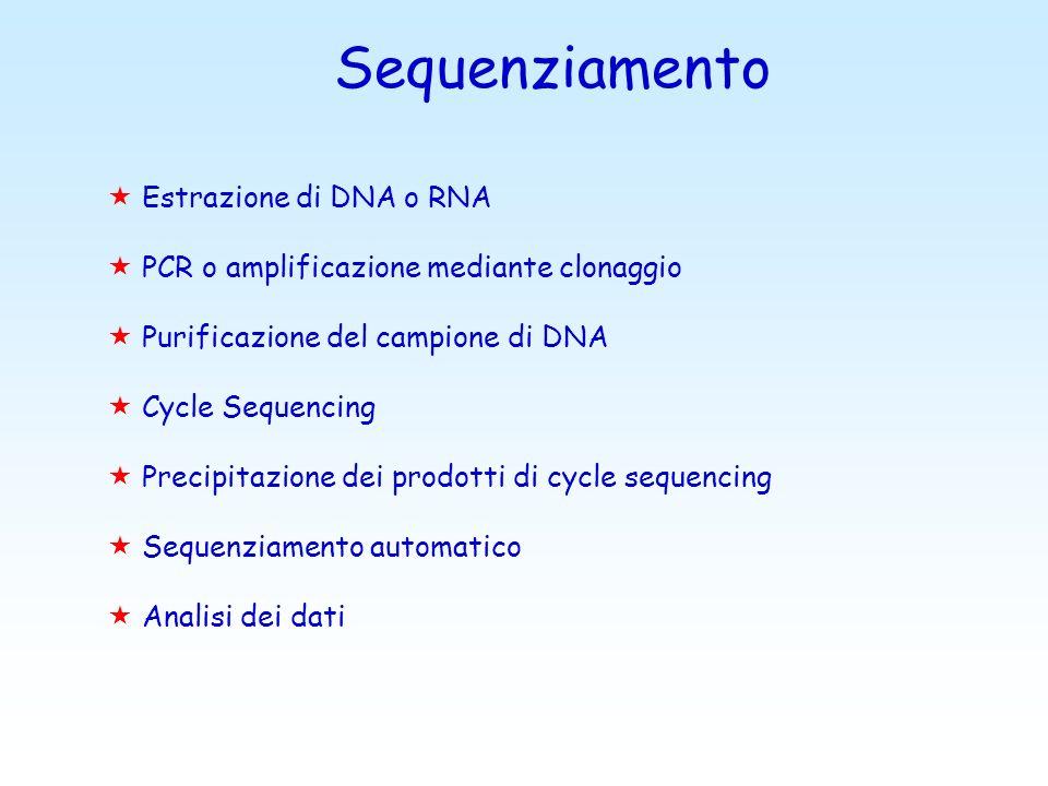 Sequenziamento « Estrazione di DNA o RNA « PCR o amplificazione mediante clonaggio « Purificazione del campione di DNA « Cycle Sequencing « Precipitazione dei prodotti di cycle sequencing « Sequenziamento automatico « Analisi dei dati