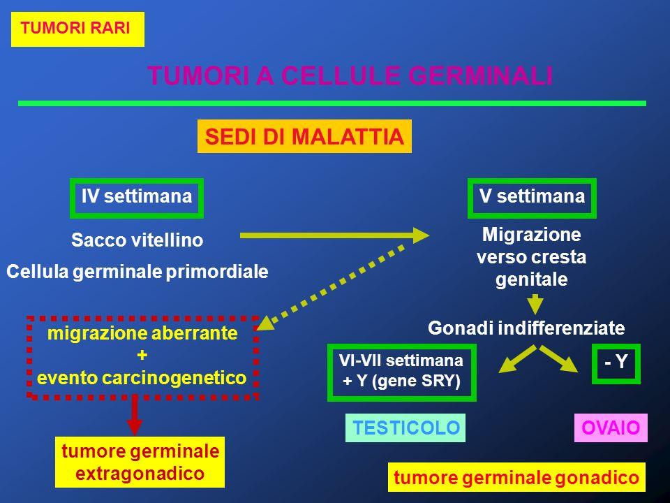 TUMORI A CELLULE GERMINALI TUMORI RARI Sacco vitellino Cellula germinale primordiale IV settimanaV settimana Migrazione verso cresta genitale migrazio