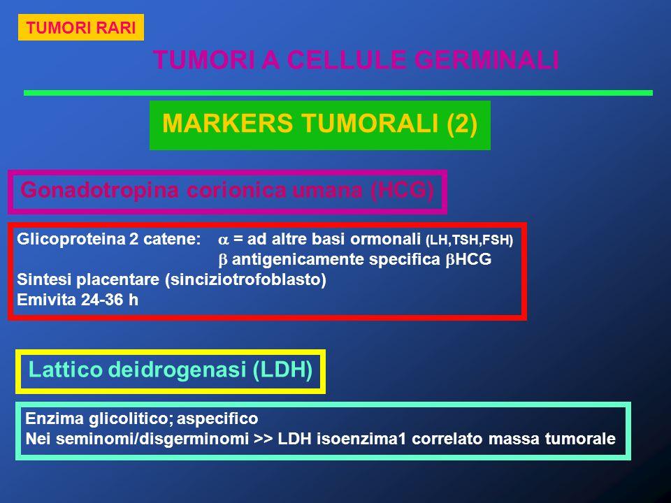 TUMORI A CELLULE GERMINALI TUMORI RARI MARKERS TUMORALI (2) Gonadotropina corionica umana (HCG) Glicoproteina 2 catene: = ad altre basi ormonali (LH,T