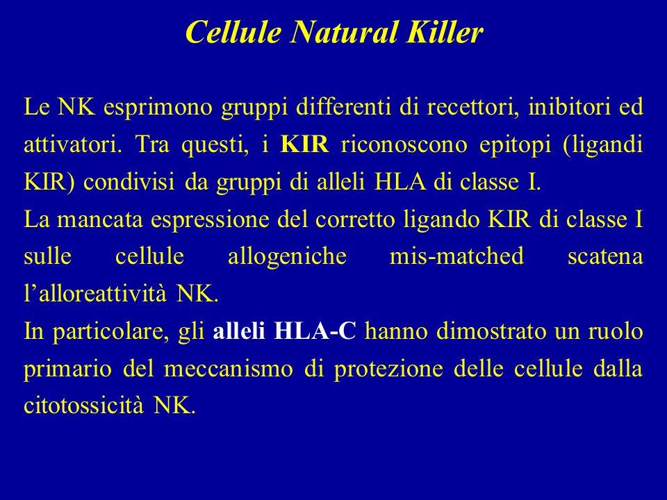 Le NK esprimono gruppi differenti di recettori, inibitori ed attivatori.