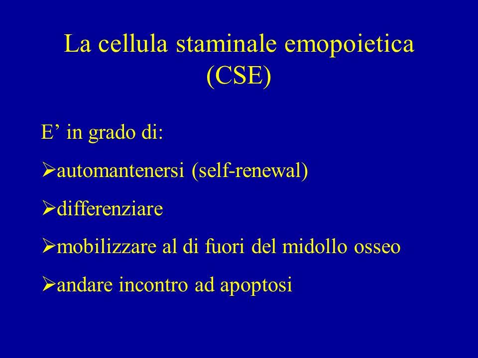 La cellula staminale emopoietica (CSE) E in grado di: automantenersi (self-renewal) differenziare mobilizzare al di fuori del midollo osseo andare incontro ad apoptosi