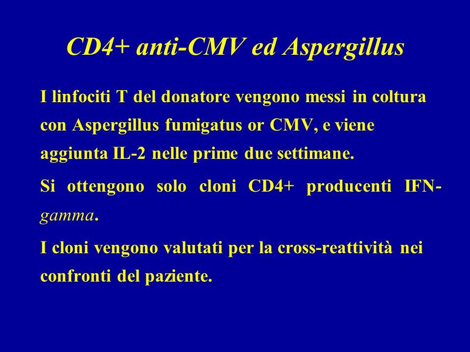 CD4+ anti-CMV ed Aspergillus I linfociti T del donatore vengono messi in coltura con Aspergillus fumigatus or CMV, e viene aggiunta IL-2 nelle prime due settimane.
