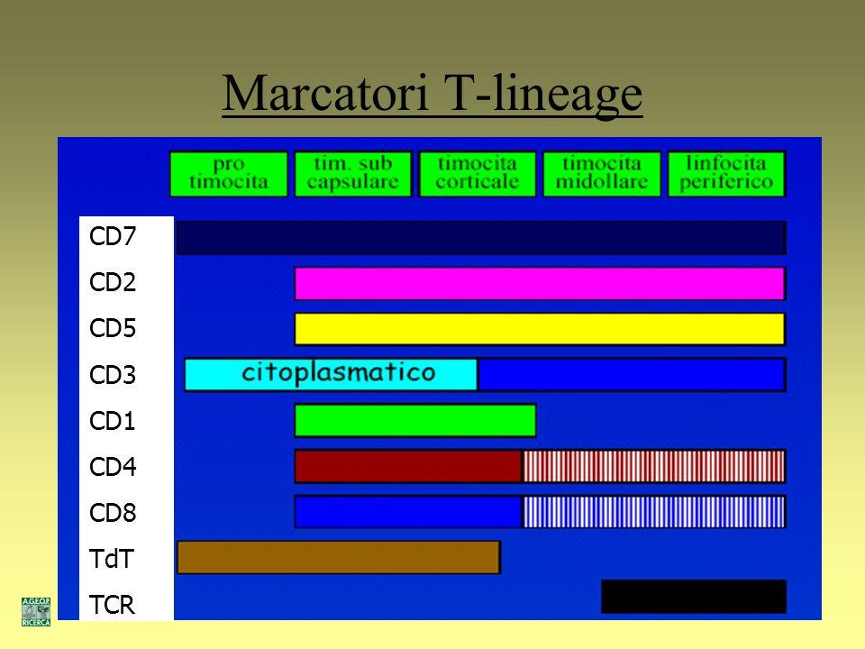 Marcatori B-lineage TdT CD79a CD19 CD10 CD20 CD22 Cu SmIg