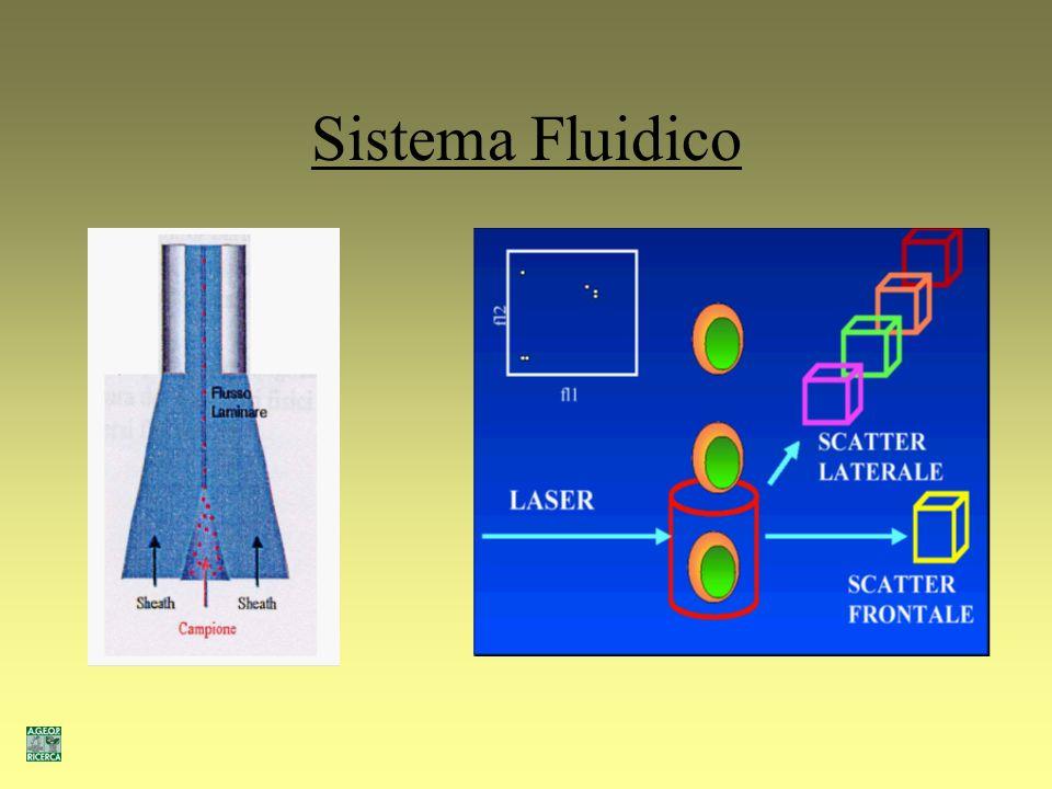 Principi di funzionamento Sistema fluidico (focalizzazione idrodinamica) Sistema ottico (laser Argon 488nm) Sistema elettronico (software CellQuest)