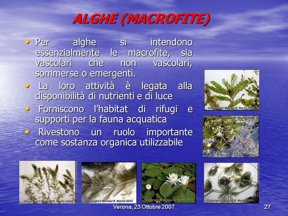 Verona, 23 Ottobre 200727 Per alghe si intendono essenzialmente le macrofite, sia vascolari che non vascolari, sommerse o emergenti. Per alghe si inte
