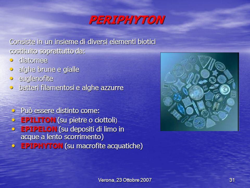Verona, 23 Ottobre 200731 PERIPHYTON Consiste in un insieme di diversi elementi biotici costituito soprattutto da: diatomee diatomee alghe brune e gia