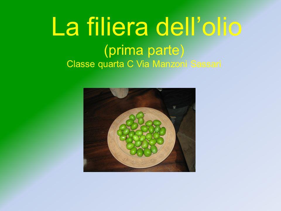 La filiera dellolio (prima parte) Classe quarta C Via Manzoni Sassari