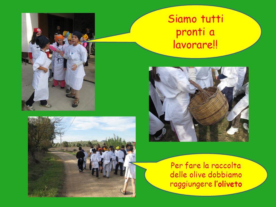 Per fare la raccolta delle olive dobbiamo raggiungere loliveto Siamo tutti pronti a lavorare!!