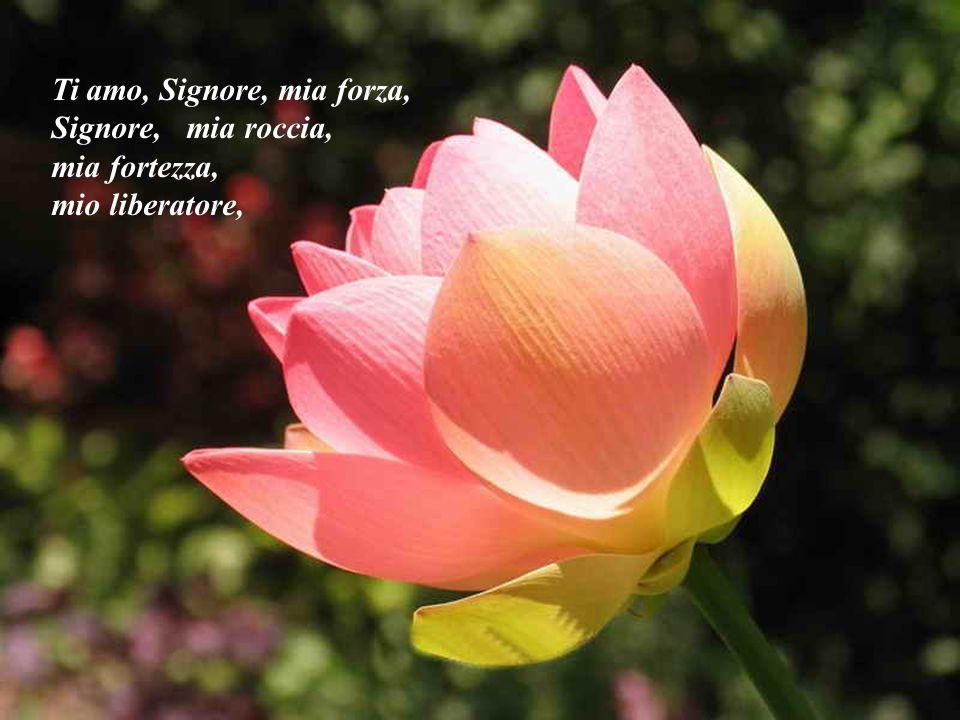 Ti amo, Signore, mia forza, Signore, mia roccia, mia fortezza, mio liberatore,