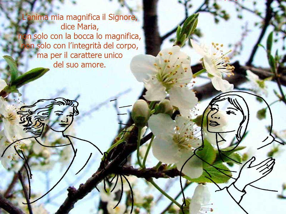 Affinchè, mentre la sua anima magnifica il Signore, ella non rifugga dallessere magnificata, cioè lodata dalla mia bocca.