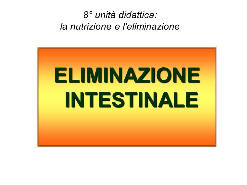 8° unità didattica: la nutrizione e leliminazione ELIMINAZIONE INTESTINALE