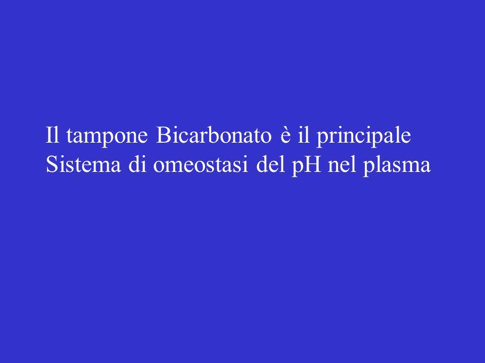 Il tampone Bicarbonato è il principale Sistema di omeostasi del pH nel plasma