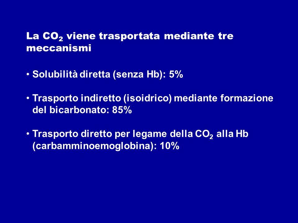 Solubilità diretta (senza Hb): 5% Trasporto indiretto (isoidrico) mediante formazione del bicarbonato: 85% Trasporto diretto per legame della CO 2 all