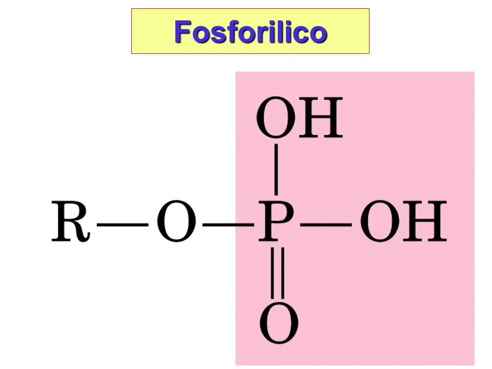 Fosforilico