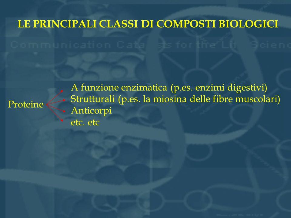 LE PRINCIPALI CLASSI DI COMPOSTI BIOLOGICI Proteine A funzione enzimatica (p.es. enzimi digestivi) Strutturali (p.es. la miosina delle fibre muscolari