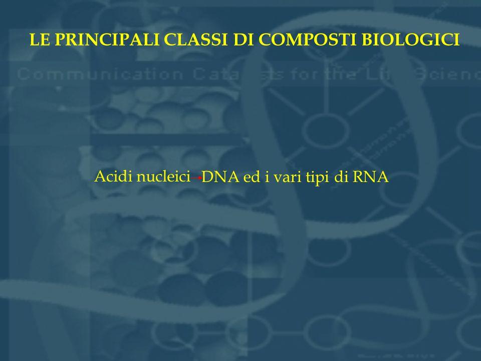 LE PRINCIPALI CLASSI DI COMPOSTI BIOLOGICI Acidi nucleici DNA ed i vari tipi di RNA